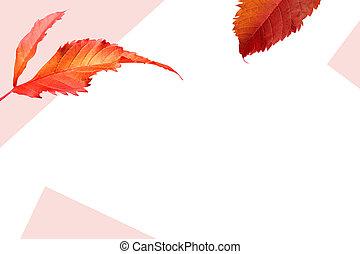 espace, feuilles, automne, conception, fond, copie