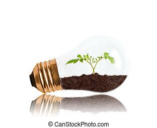 espace, sol, intérieur, plant, jeune, lumière, croissant, ampoule, copie, dehors