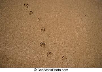 espace, texte, encombrements, sable, chien, pistes, mouillé, petit, copie, plage