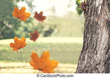 espace, voler, arbre, feuilles jaune, automne, fond, érable, copie, vide