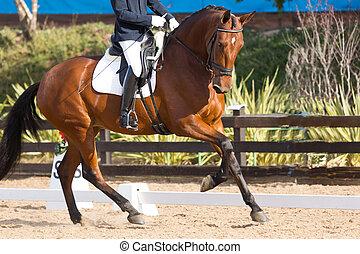 espagnol, cheval