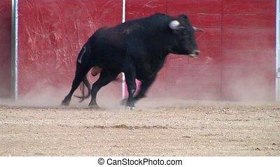 espagnol, corrida, puissant, taureau