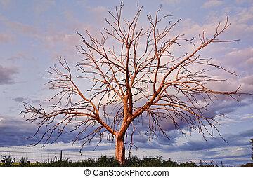 espantoso, árvore