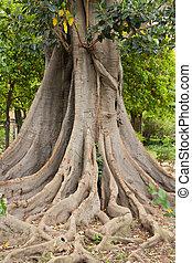 espantoso, árvore, raizes