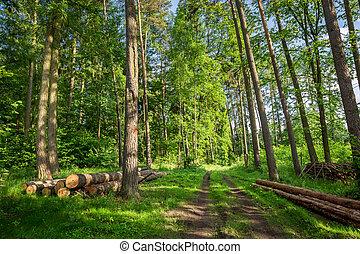 espantoso, primavera, em, a, floresta verde, polônia