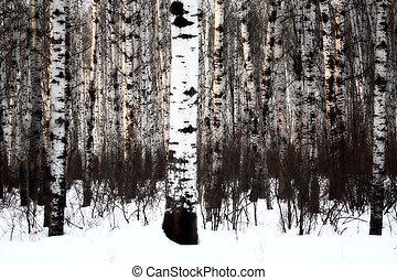 espe, winter, wald