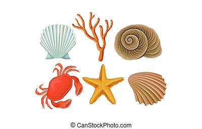 especie, diferente, vector, set., fondo, océano, marina,...
