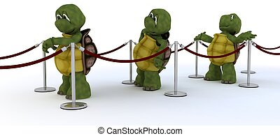 esperar, línea, tortugas