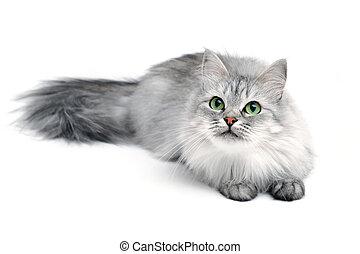 espiègle, chat