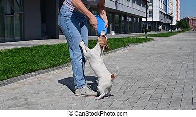 espiègle, russell, terrier, promenade, rigolote, cric, outdoors., propriétaire, jeux, femme, chien