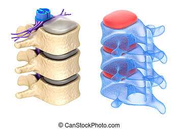 espina dorsal, aislado, blanco