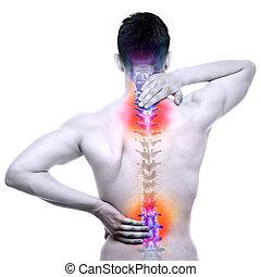espina dorsal, dolor, -, macho, daño, espinazo, aislado, blanco, -, verdadero, anatomía, concepto