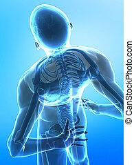 espina dorsal, dolor