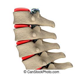 espina dorsal humana, ilustración, 3d