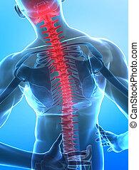 espina dorsal, humano, radiografía