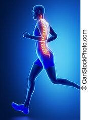 espina dorsal, visible, corriente, hombre