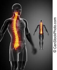 espina dorsal, x--ray, negro, examen de hueso