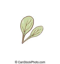 espinaca, icon., verde, crudo, ramo, arriba., primavera, ...
