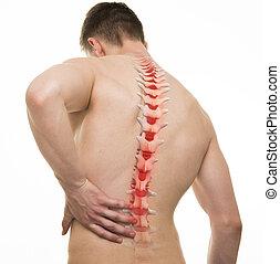 espinal, dolor, -, tiro del estudio, con, 3d, ilustración, aislado, blanco