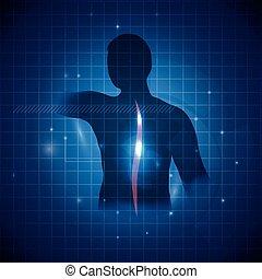 espinha, vertebral, acento, coluna, human