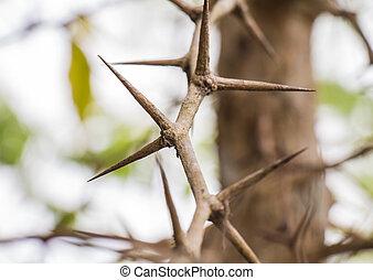 espinhos, afiado, árvore