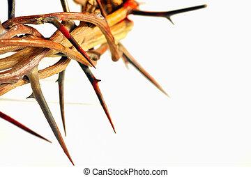 espinhos, branca, coroa, isolado