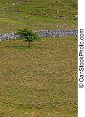 espino, árbol, en, un, terreno estéril