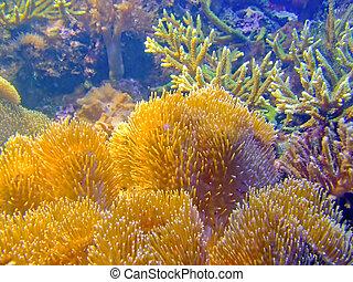 esponja, coral