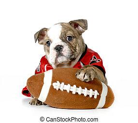esportes, cão caça