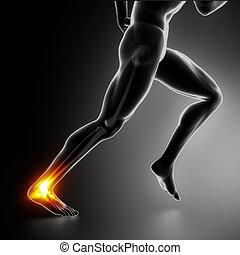 esportes, tornozelo, e, achilles colocar salto* no* sapato*,...