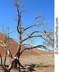 esquelético, árbol, en, el, desierto de kalahari