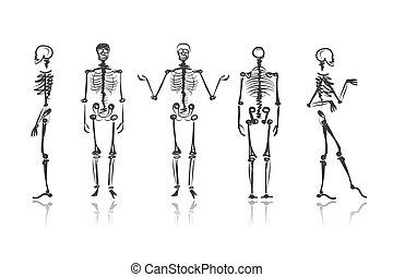 esqueleto, esboços, para, seu, desenho