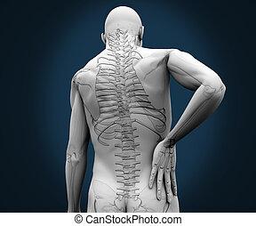 esqueleto, teniendo, dolor, en, el suyo, espalda