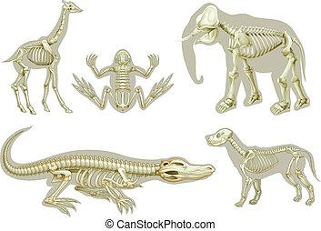 esqueletos, de, animales