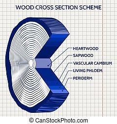esquema, esboço, madeira, seção, crucifixos