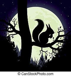 esquilo, árvore.