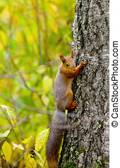 esquilo, sentando, ligado, a, banco