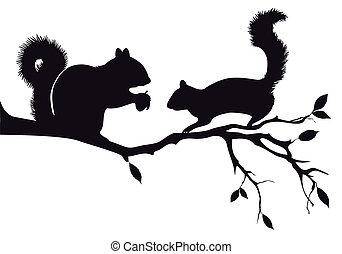 esquilos, ligado, árvore, vetorial