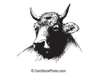 esquisser, vache