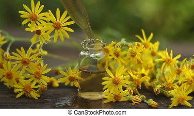 Essence of Jacobaea vulgaris flowers on table in beautiful...
