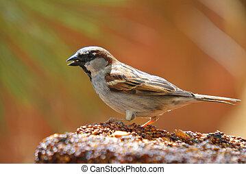 essende, bunte, zubringerlinie, samen, wilder vogel, block