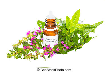 Essential oil from the Lythrum salicaria plant - Brown...