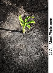 essere, concetto, ceppo, successo, affari, albero, su, morto, crescita, lattina, nuovo