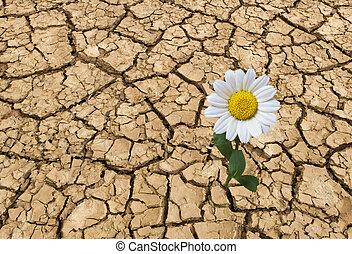 estéril, tierra, en, verano