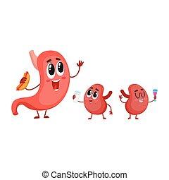 Estómago, divertido, caracteres, riñón, humano, sonriente, Órganos, digestivo
