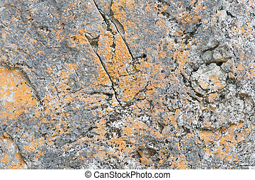 Established limestone boulder rock face with lichen
