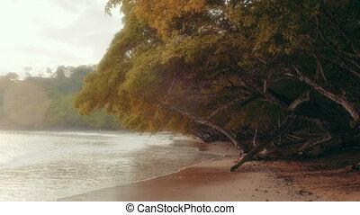 Establishing shot of an untamed tropical beach - A natural...