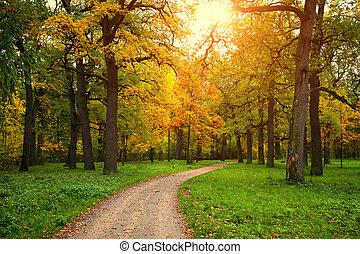 estación, parque, camino, otoño