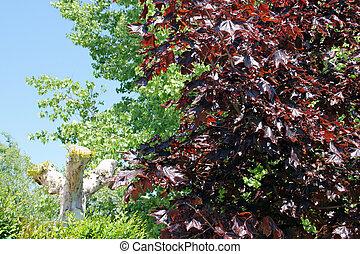 estacional, cambio, árboles, variedad