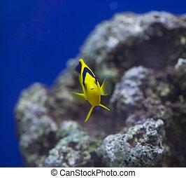 estanque del acuario, peces marinos